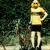 bikesgonewild
