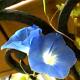 Avatar de lilas