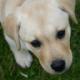 Profile picture of lynnduffy