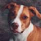 Profile picture of lucydog