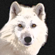 Avatar of whitewolf1988