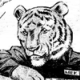 Profile picture of silvercat17