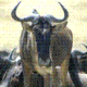 Avatar of Gnu Atheist