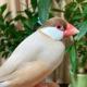 Gumi さんのプロフィール写真