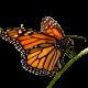 ilhan kurthan profil resmi