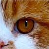 8a834d08f3016d39b9f45307f67d6e68.png?s=100&d=http%3a%2f%2fknitdarling.s3.amazonaws.com%2fassets%2fsheep avatars%2fsheepsies7