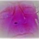 Foto del perfil de Eduardo Sosa