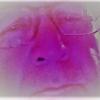 Profile photo of Eduardo Sosa