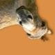 Profile photo of khendar