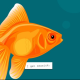 Profile picture of goldfish-looser