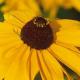Profile picture of gaelen