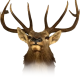 Avatar of elks2477