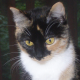 Profile photo of Kitten Whisperer in Oregon (8/27)