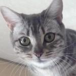 Profile picture of satoshi