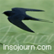 Profile picture of insojourn