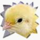 Avatar of Chickypez