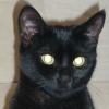 Sting C. avatar