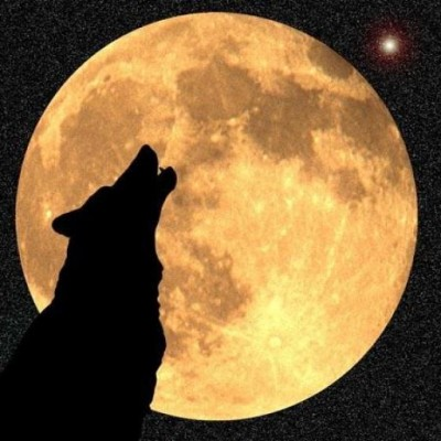 Prsjasiowolf