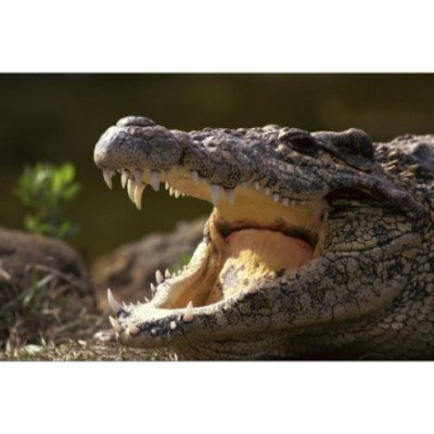 Crocdoc