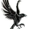 patrik f. avatar