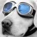 webdave avatar
